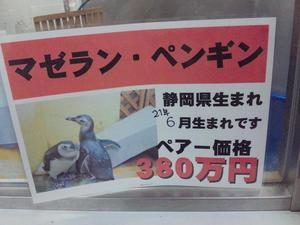 SH3D0866.JPG